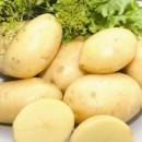 Семенной картофель Лаперла