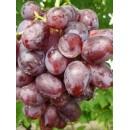 """виноград розовый среднеспелый """"Низина"""""""