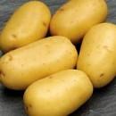Семенной картофель Бельмонда