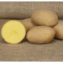 Семенной картофель Мадлен