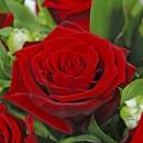 Гранд При, Чайно-гибридная роза