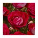 Миниатюрная роза Мейди (Maidi)