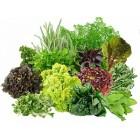 Семена зеленных и пряно-вкусовых культур