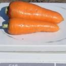 "Морковь Болтекс, 10 гр., ТМ ""Добрі Сходи"""