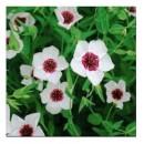 """Лён крупноцветковый, белый с красным глазком, 0.5 г, """"ТМ """"Садыба Центр"""""""