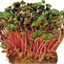 Микрозелень редиса, 10 гр.