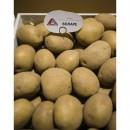 Семенной картофель Воларе